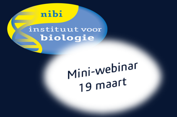 Eerste NIBI mini-webinar over het puberbrein en gamification